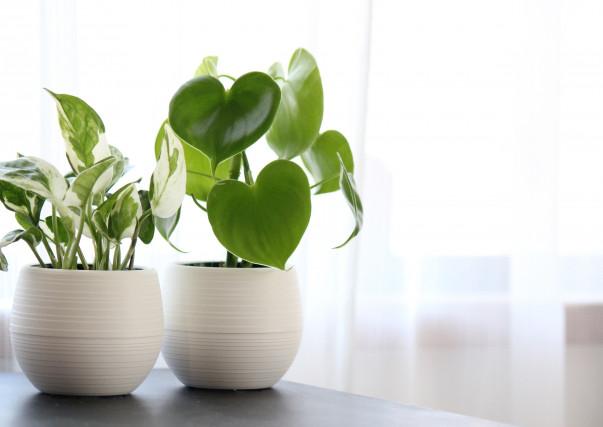 植物を取り入れる